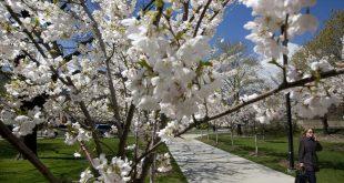 Лунный посевной календарь на апрель 2017 года садовода и огородника