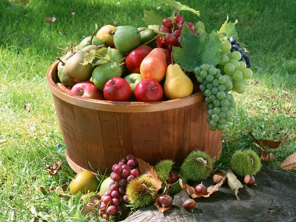 Лунный посевной календарь на август 2017 года садовода и огородника