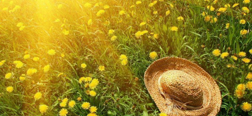 Лунный календарь на июль 2017 года садовода и огородника цветовода