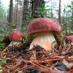 Как сеять грибы на даче?