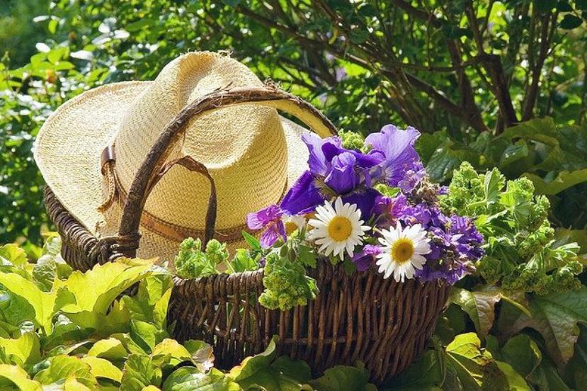 Лунный посевной календарь на июль 2017 года садовода и огородника