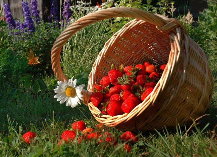 Лунный посевной календарь на июнь 2017 года садовода и огородника