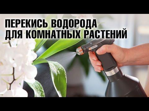 Полив домашних цветов перекисью водорода