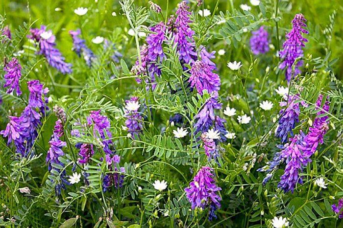 Лунный календарь на июнь 2017 года садовода и огородника цветовода