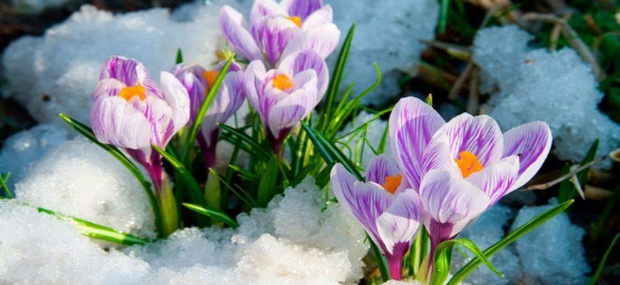 Лунный календарь на март 2017 года садовода и огородника цветовода