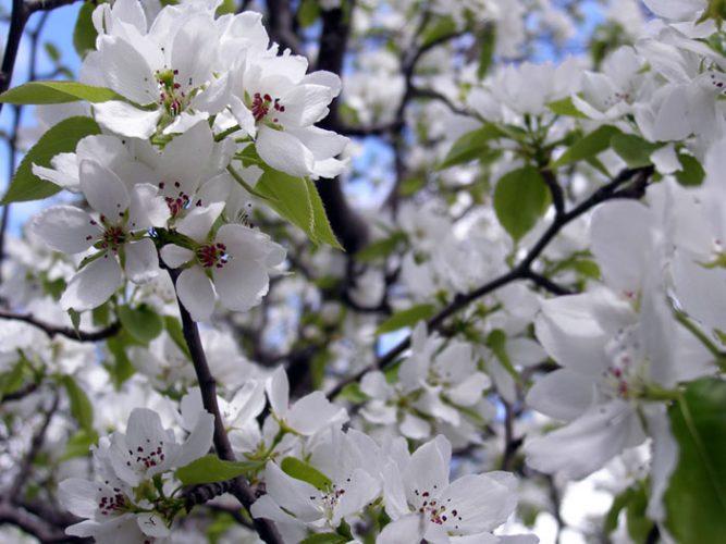 Лунный календарь на май 2017 года садовода и огородника цветовода