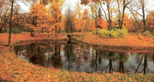 Лунный посевной календарь на октябрь 2017 года садовода и огородника