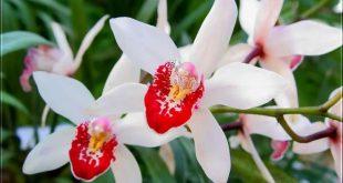Как подкормить орхидею в дКак подкормить орхидею в домашних условиях? омашних условиях?