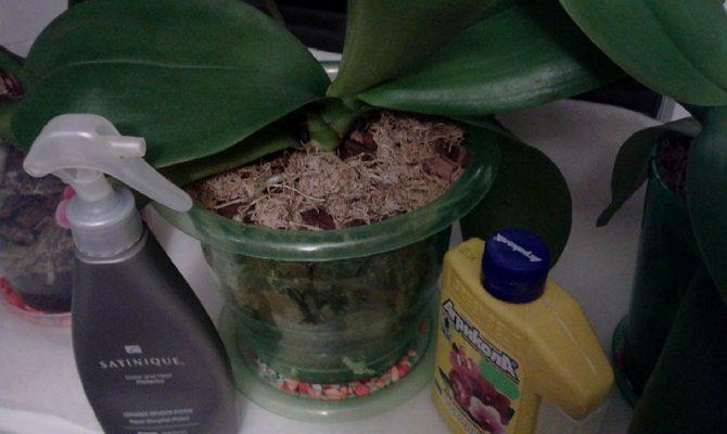 Как подкормить орхидею в домашних условиях?