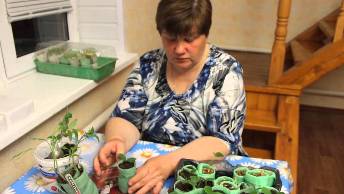 Посадка семян в улитку с туалетной бумагой видео Юлия Минаева