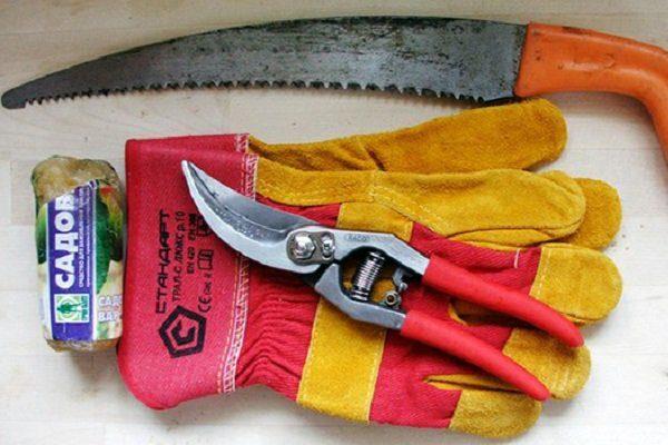 Как обрезать крыжовник весной