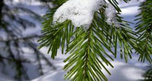 Лунный календарь на декабрь 2017 года садовода и огородника цветовода