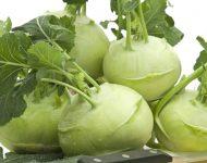 Капуста кольраби: выращивание и уход