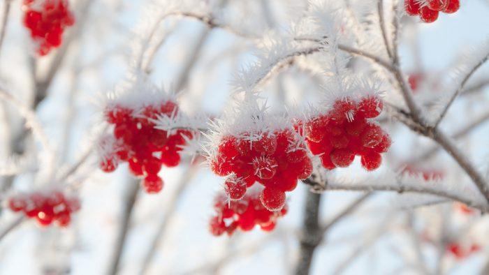 Представляем вам Лунный календарь на ноябрь 2017 года садовода и огородника цветовода. Теперь вы будете знать, когда проводить те или иные манипуляции на огороде.