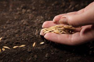 Кабачки выращивание и уход в открытом грунте