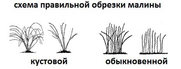 Как повысить урожайность малины