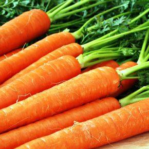 Как вырастить большую морковь в открытом грунте