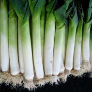 Лук порей: выращивание из семян, когда сажать?