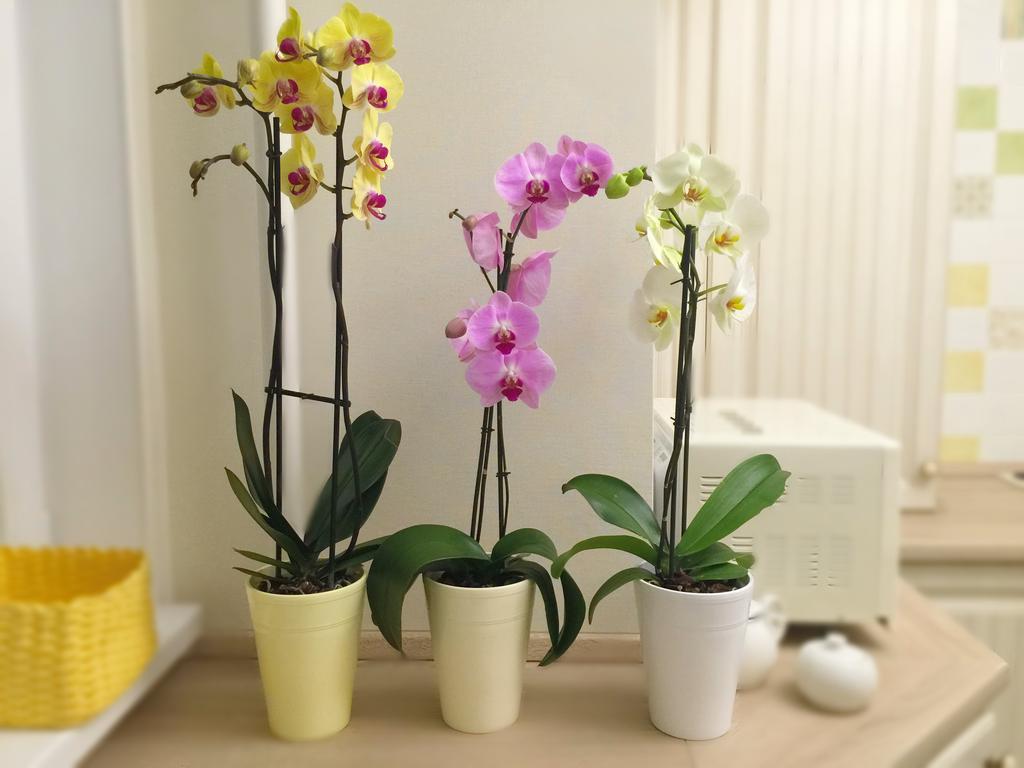 Почему у орхидеи желтеют листья что делать