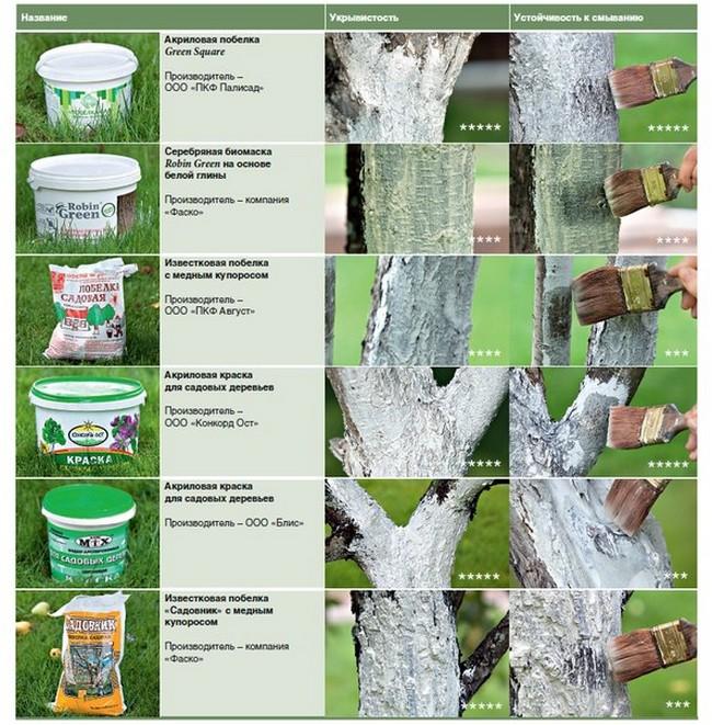 Как белить деревья известью весной?