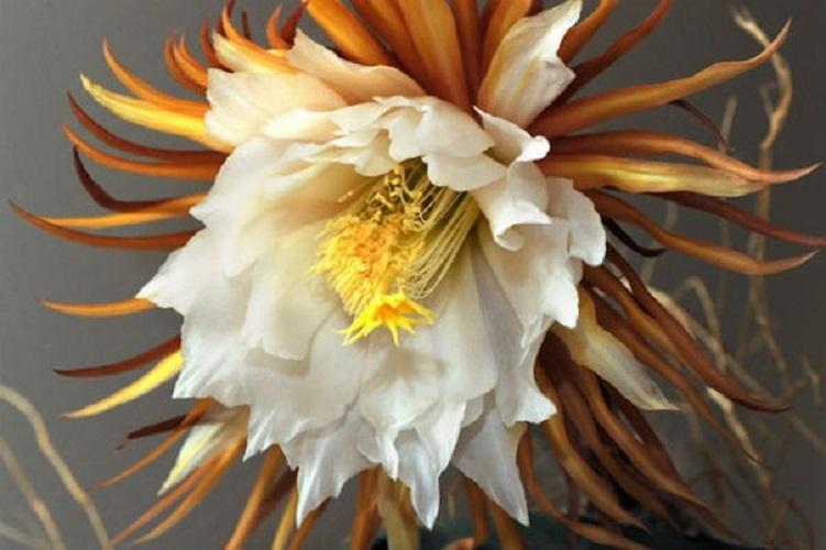 Самый некрасивый цветок в мире 18