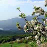 Чем подкормить грушу весной?