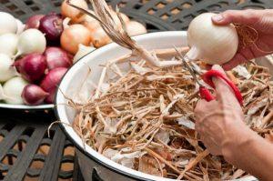 Нужно ли обрезать лук перед посадкой весной