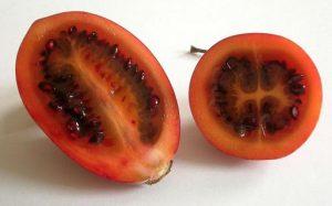 Цифомандра томатное дерево метод выращивания