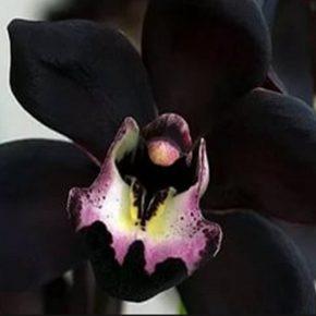 Как ухаживать за орхидеями в домашних условиях в горшке чтобы цвела