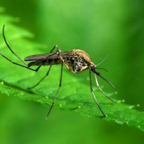 Как избавиться от комаров на дачном участке?
