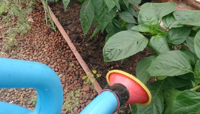 Подкормка дрожжами растений отзывы