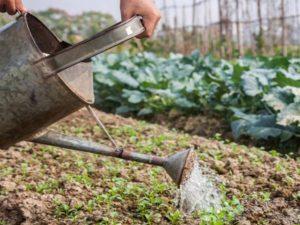 Чем подкормить свеклу и морковь народными средствами