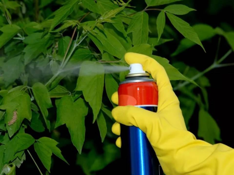 Чем полить дерево чтобы оно засохло?