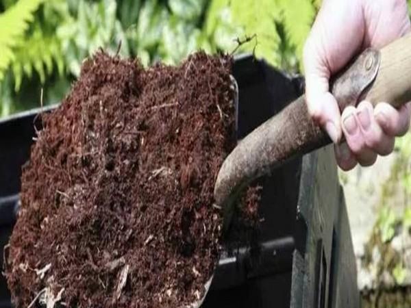 Чем полить лук чтобы лучше рос?