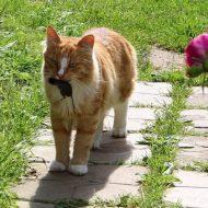 Как избавиться от мышей на огороде?