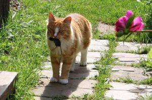 Как избавиться от мышей на огороде