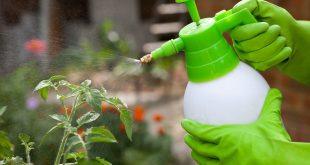 Как развести борную кислоту для опрыскивания томатов