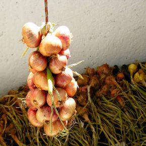 Как правильно хранить лук?