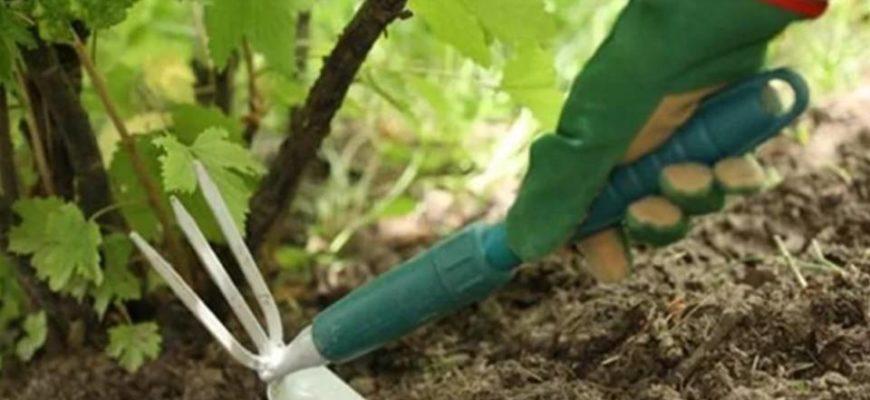 Как ухаживать за виноградом в первый год посадки