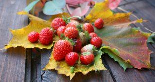 Осенние подкормки клубники