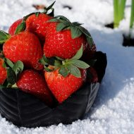 Как подготовить клубнику к зиме?