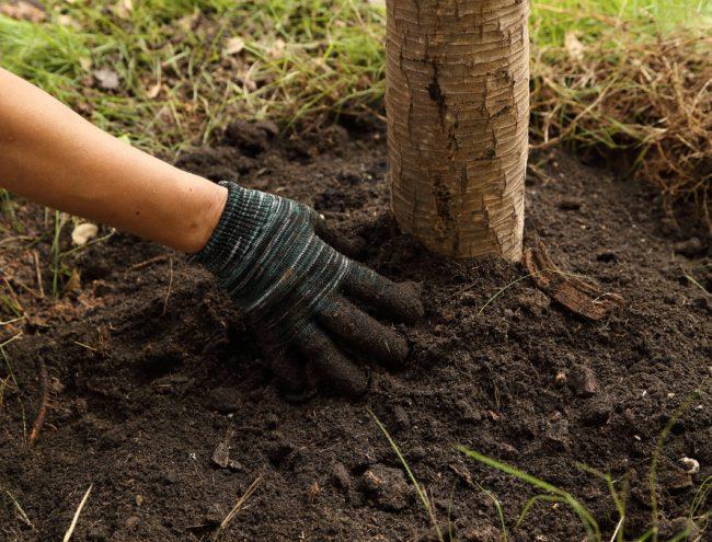 Чем удобрить землю осенью под деревьями и кустарниками