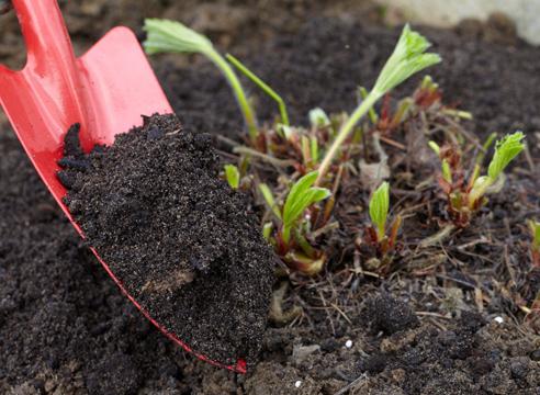 Чем удобрить землю осенью под клубнику