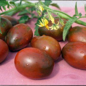 Чем удобрить землю осенью под помидоры