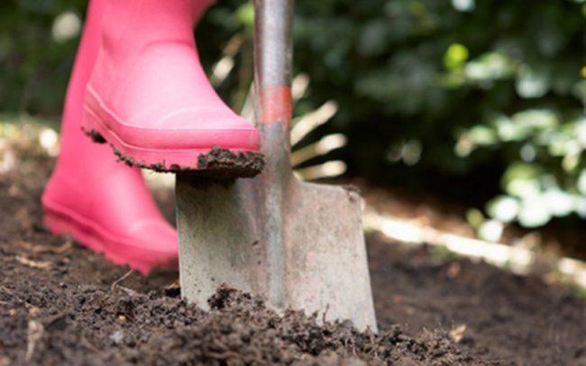 Чем удобрять осенью огород