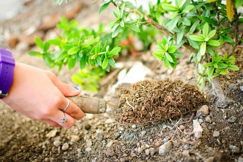 Осенние удобрения для плодовых деревьев