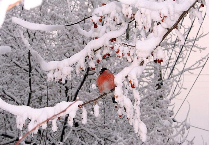 Лунный посевной календарь на февраль 2018 года садовода и огородника
