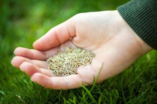 Как сеять газонную траву своими руками летом