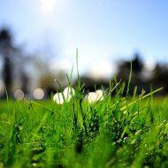 Как сеять газонную траву своими руками летом?