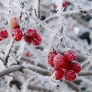 Лунный посевной календарь на январь 2018 года садовода и огородника